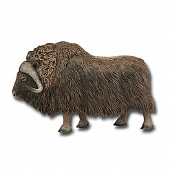COLLECTA - WILD - Musk Ox, 88837